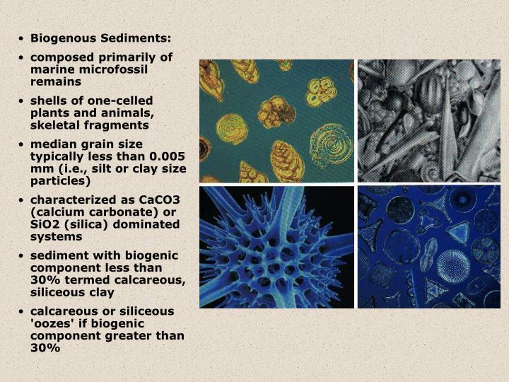 Biogenous Sediments: