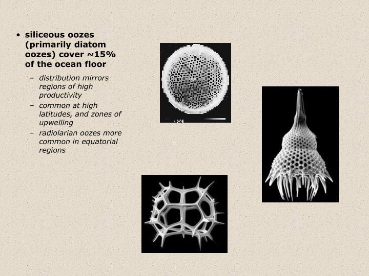 siliceous oozes (primarily diatom oozes) cover ~15% of the ocean floor