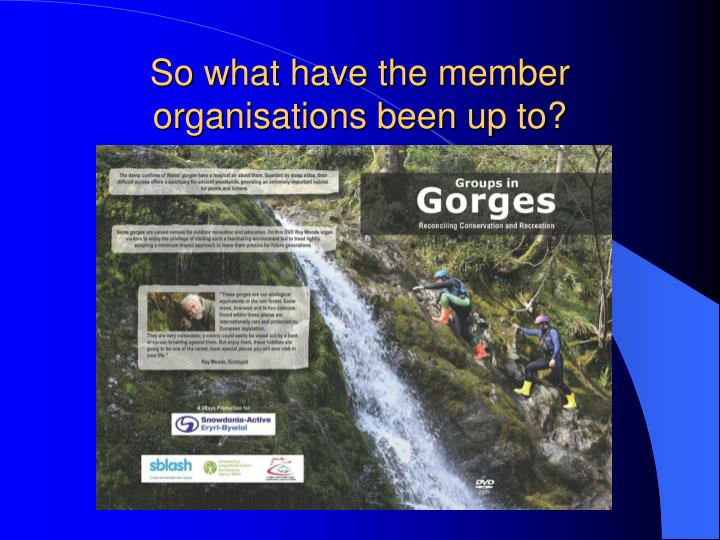 So what have the member organisations been up to?