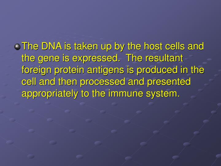 The DNA is taken up by the host cells and the gene is expressed.  The resultant foreign protein antigens is produced in the cell and then processed and presented appropriately to the immune system.