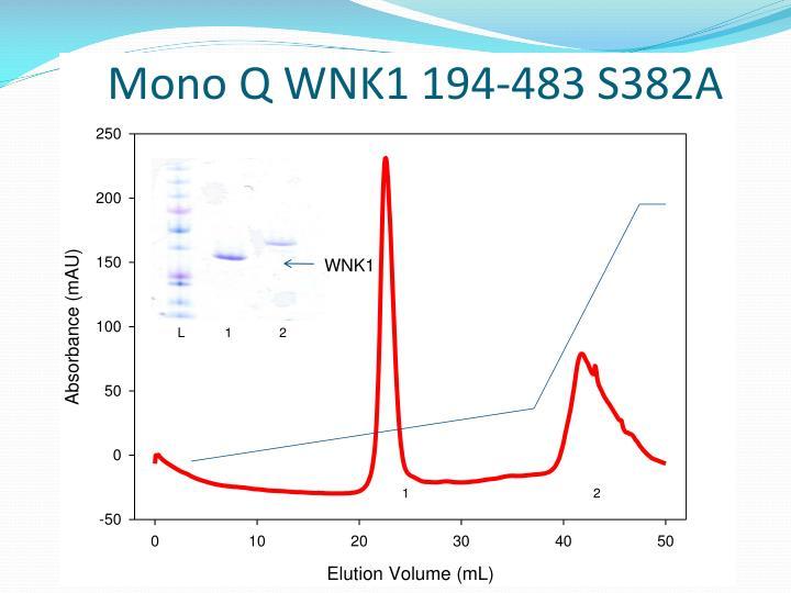 Mono Q WNK1 194-483 S382A