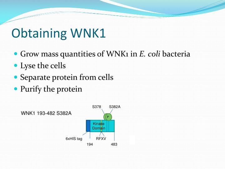 Obtaining WNK1