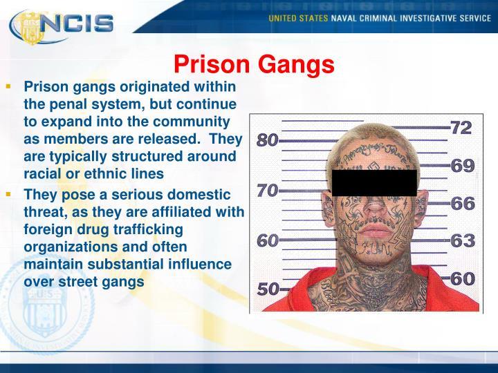 Prison Gangs