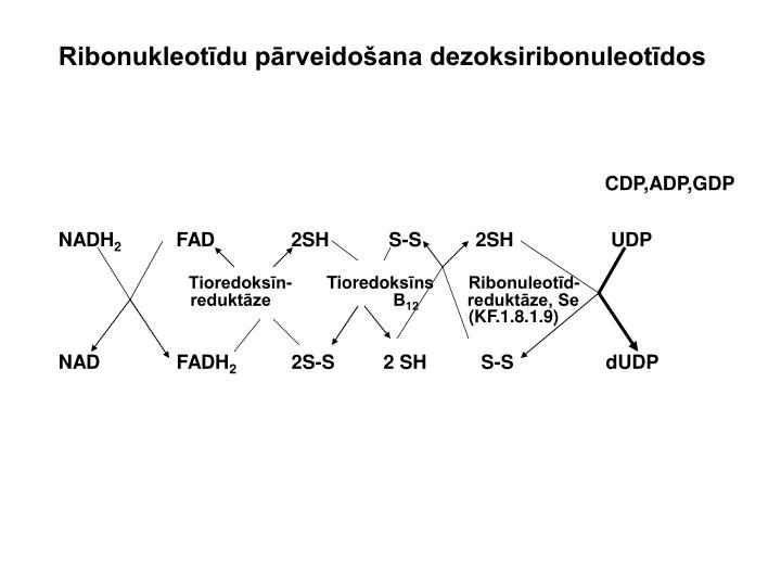 Ribonukleotīdu pārveidošana dezoksiribonuleotīdos