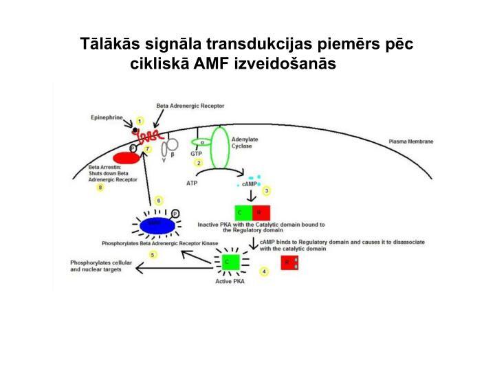 Tālākās signāla transdukcijas piemērs pēc
