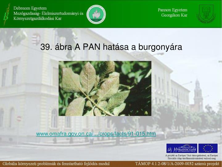 39. bra A PAN hatsa a burgonyra