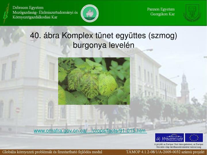 40. bra Komplex tnet egyttes (szmog) burgonya leveln