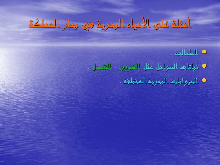 أمثلة على الأحياء البحرية في بحار المملكة