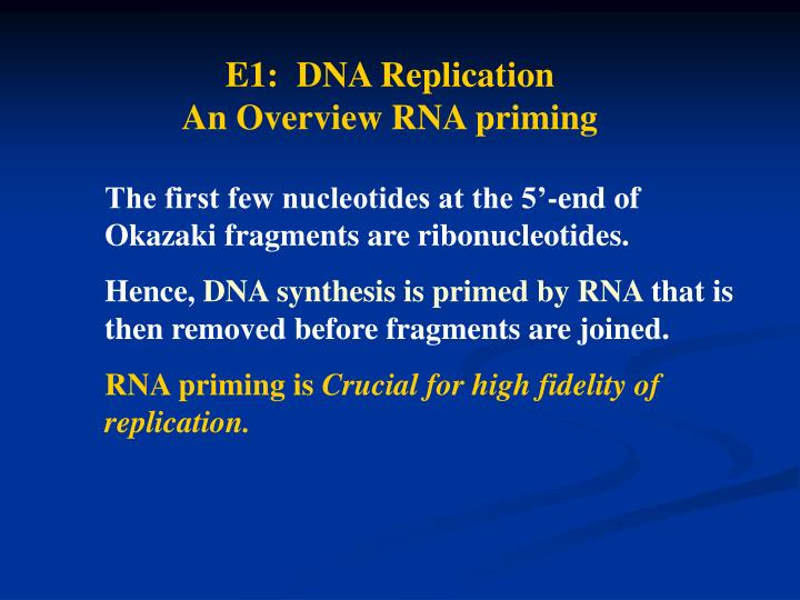 E1:  DNA Replication