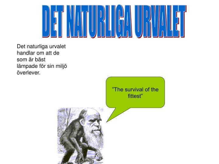 DET NATURLIGA URVALET
