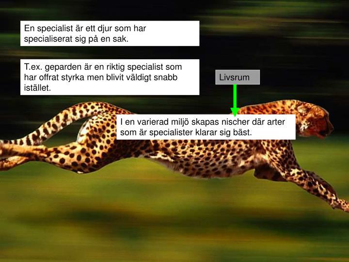 En specialist är ett djur som har specialiserat sig på en sak.