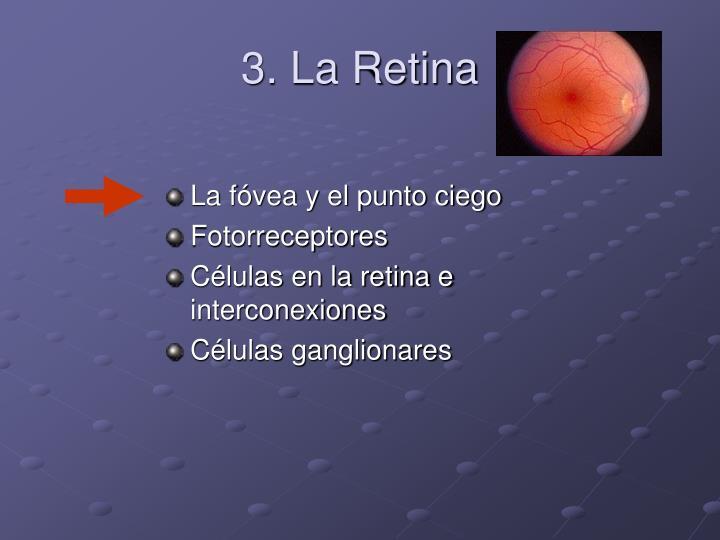 3. La Retina