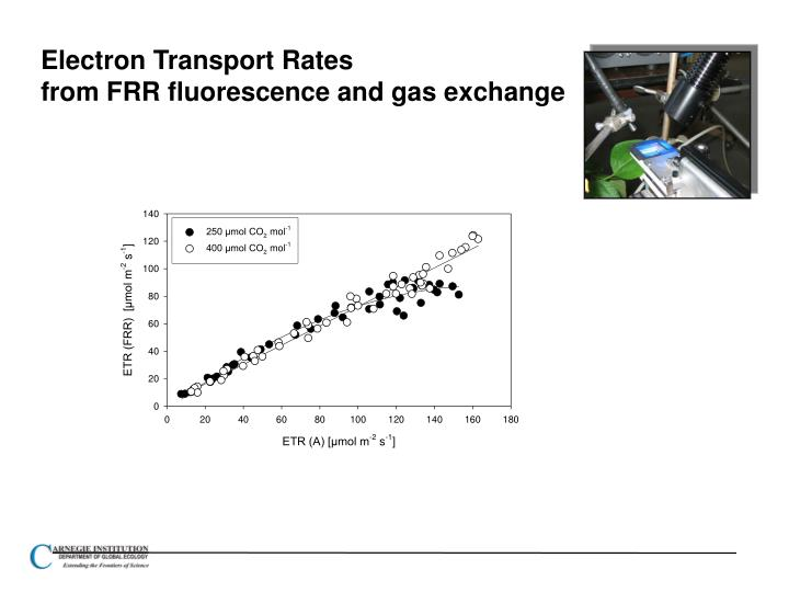 Electron Transport Rates