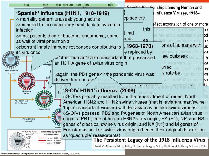 Genetic Relationships among Human and Relevant Swine Influenza Viruses, 1918–2009.