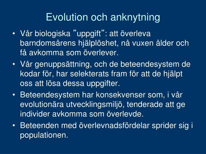 Evolution och anknytning
