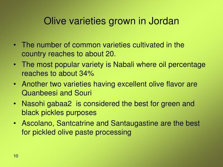 Olive varieties grown in Jordan