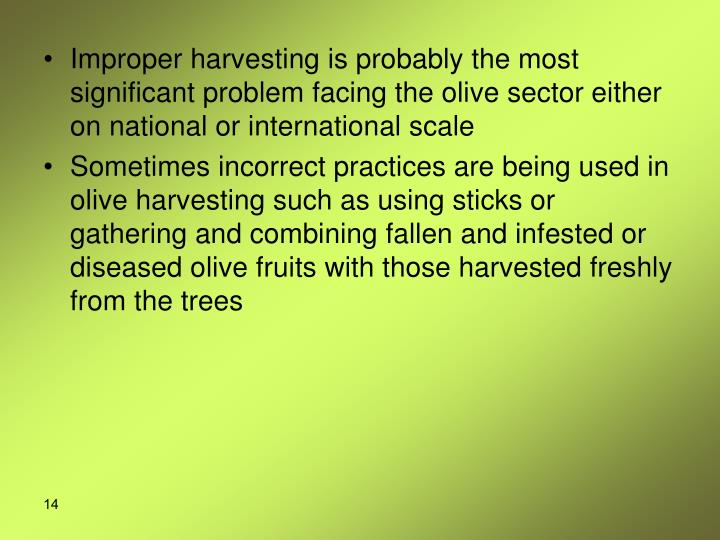Improper harvesting is probably the most significant problem facing the olive sector either on national or international scale