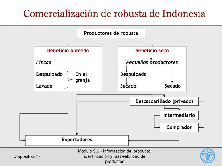 Productores de robusta