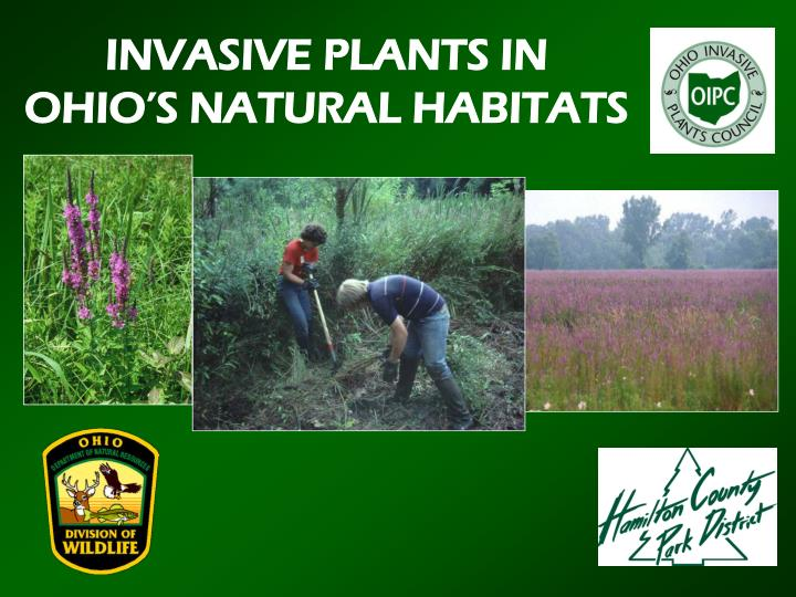 INVASIVE PLANTS IN