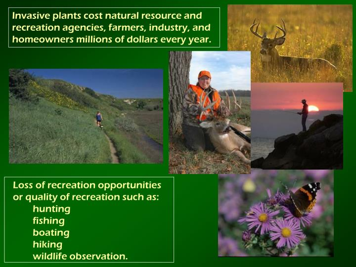 Invasive plants cost natural resource and recreation agencies, farmers, industry, and homeowners millions of dollars every year.