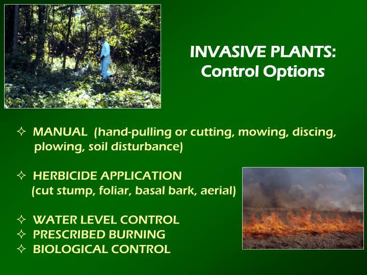 INVASIVE PLANTS: