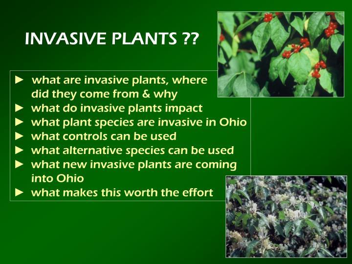 INVASIVE PLANTS ??