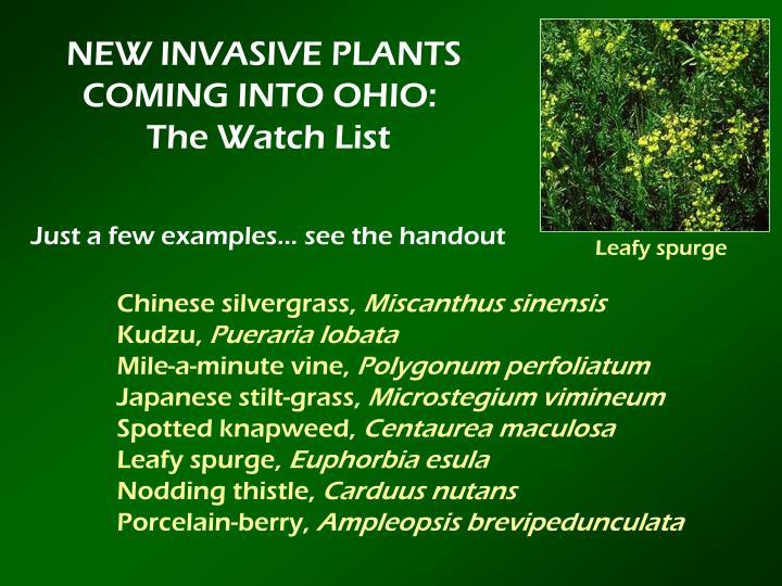 NEW INVASIVE PLANTS