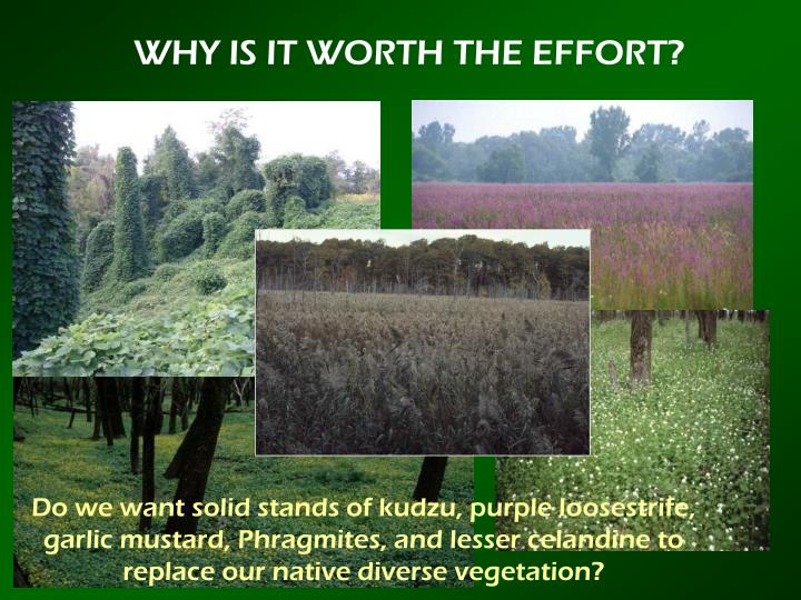 WHY IS IT WORTH THE EFFORT?