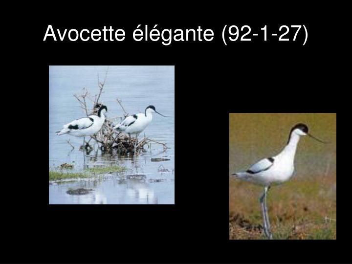 Avocette élégante (92-1-27)