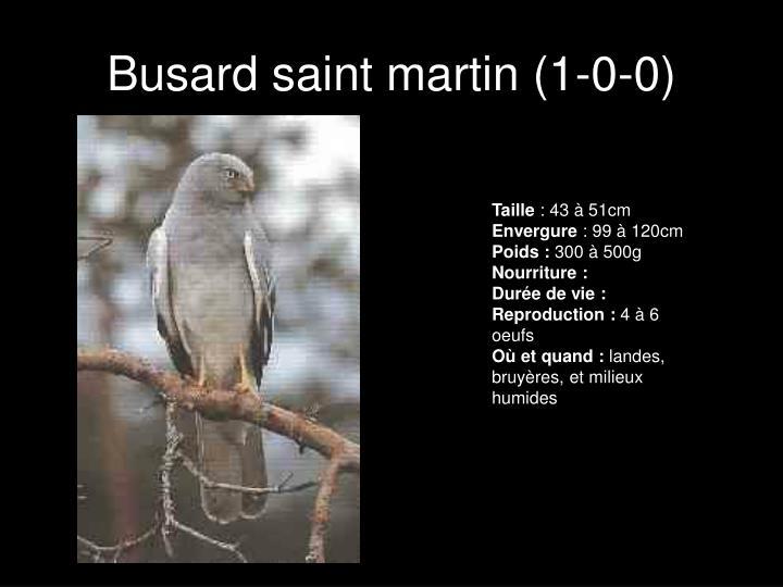 Busard saint martin (1-0-0)