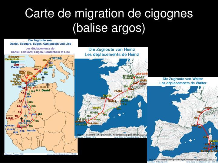 Carte de migration de cigognes (balise argos)
