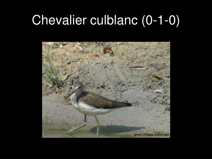 Chevalier culblanc (0-1-0)