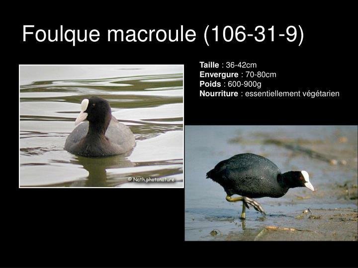 Foulque macroule (106-31-9)