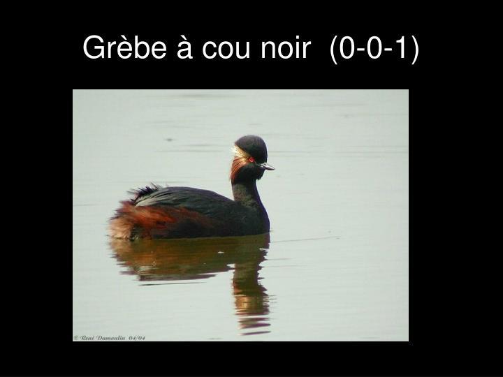 Grèbe à cou noir  (0-0-1)