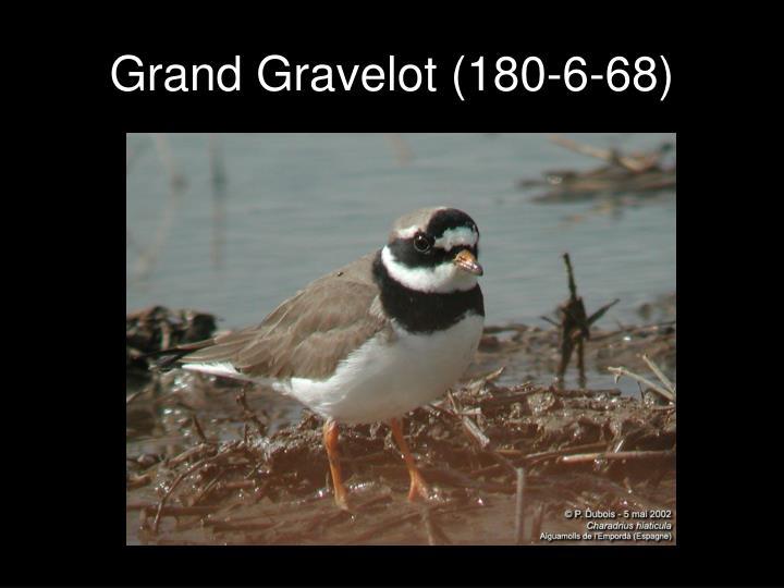 Grand Gravelot (180-6-68)