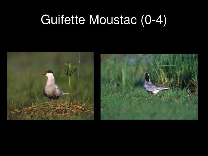Guifette Moustac (0-4)