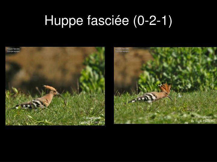 Huppe fasciée (0-2-1)