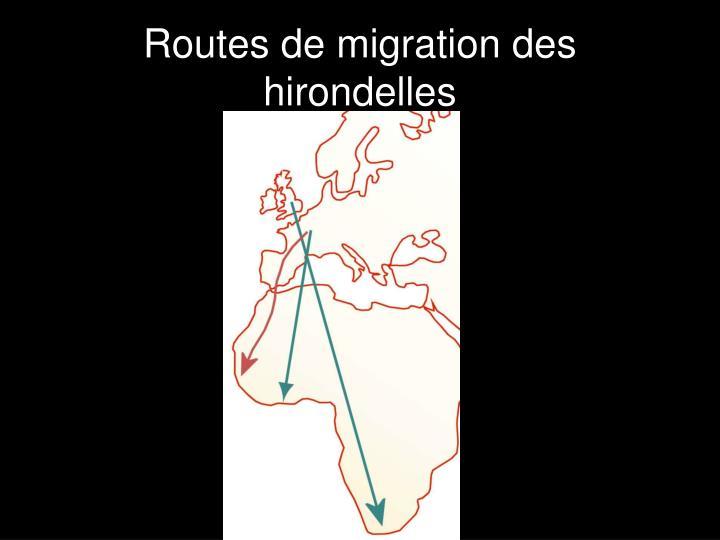 Routes de migration des hirondelles