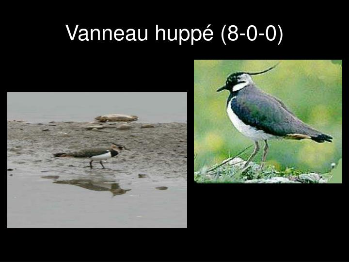 Vanneau huppé (8-0-0)
