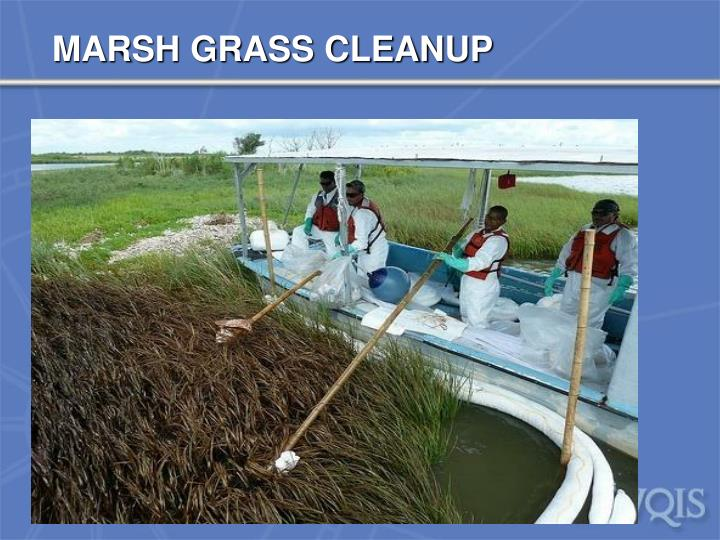 MARSH GRASS CLEANUP
