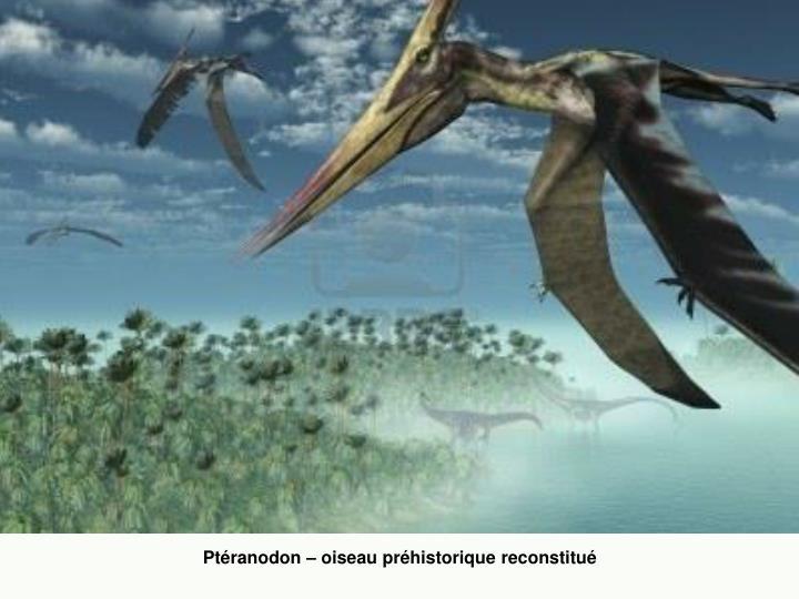 Ptéranodon – oiseau préhistorique reconstitué