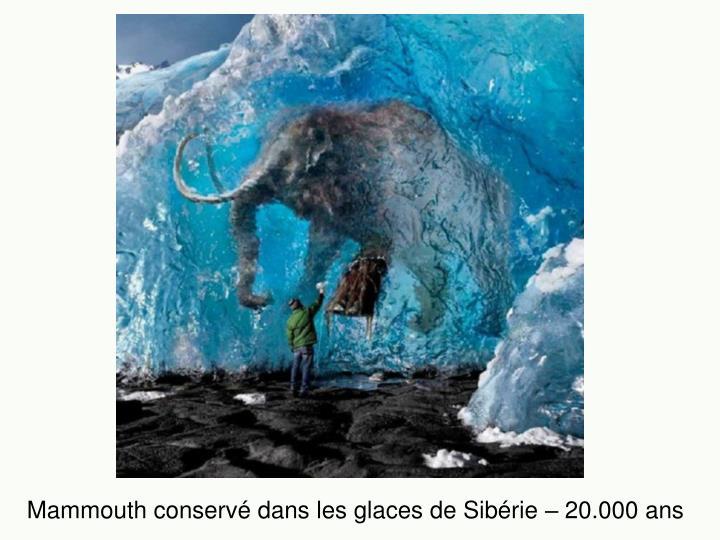 Mammouth conservé dans les glaces de Sibérie – 20.000 ans