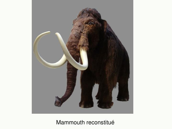 Mammouth reconstitué