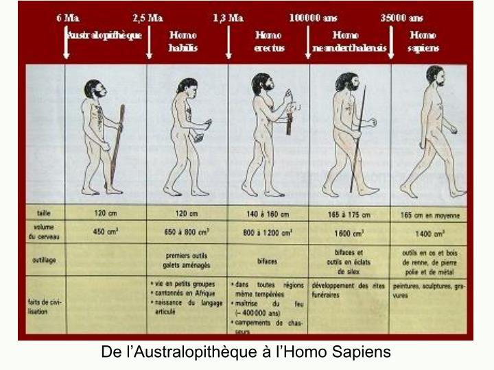 De l'Australopithèque à l'Homo Sapiens