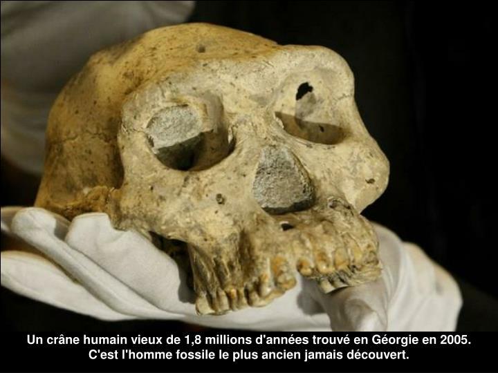 Un crâne humain vieux de 1,8 millions d'années trouvé en Géorgie en 2005.