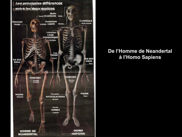 De l'Homme de Neandertal