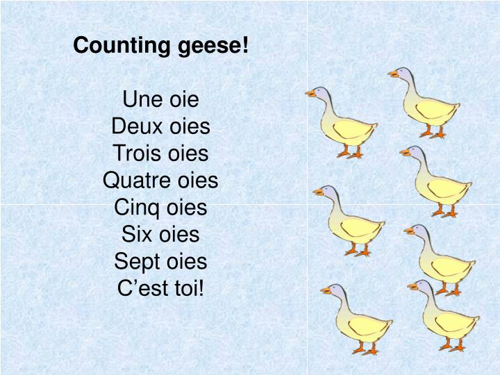 Counting geese!