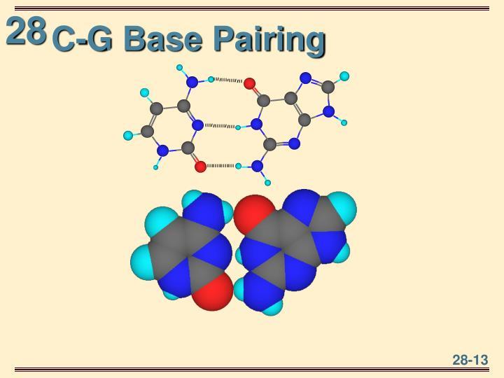 C-G Base Pairing