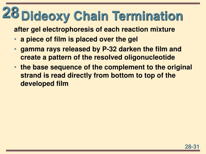 Dideoxy Chain Termination