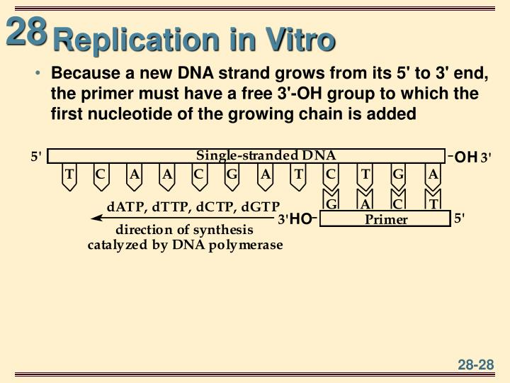 Replication in Vitro